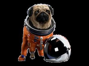 pug dog with astronaut costume
